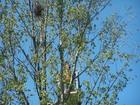 srocze gniazdo / z tyłu widoczny podnośnik z pilarzami