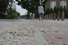 Małe Swornegacie; kamienie i piesi na trasie powodują, że czasami bezpieczniej jest poprowadzić rower...